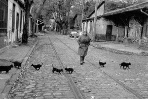 """""""Gatto che giochi per strada"""": una poesia di Fernando Pessoa"""