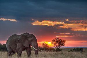 """Jorge Bucay: """"L'elefante incatenato"""", da 'Lascia che ti racconti. Storie per imparare a vivere'"""
