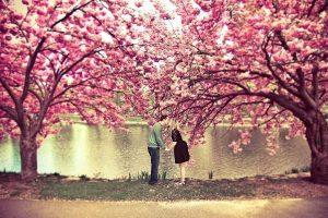 """""""La storia dei due ciliegi innamorati"""" un un Anonimo Giapponese"""