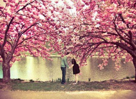 """""""La storia dei due ciliegi innamorati"""" di un Anonimo Giapponese"""